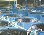 Система УЗВ для выращивания рыбы